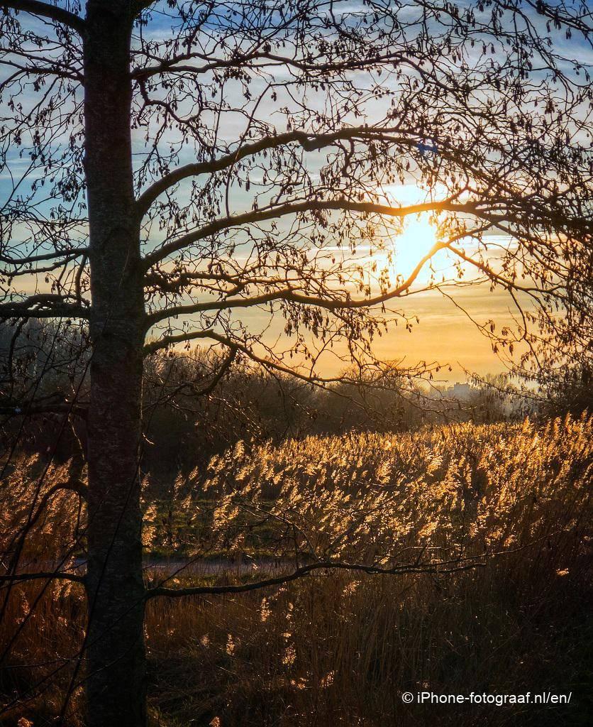 Lage zon met een boom in de avond