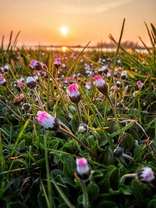 iPhone foto met bloemen en een zonsondergang.